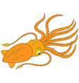 cuttlefish vector image vector image