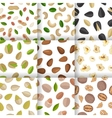 Set of Nuts and Seeds Seamless Pattern vector image