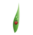 ladybird on a grass leaf vector image vector image