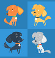 set of funny mixed breed or mongrel dog vector image
