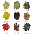 different spices set vector image vector image