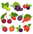 berry fruits isolated flat icons for jam or vector image