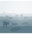 Cows graze in the field landscape sky grass vector image