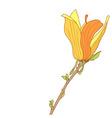 Yellow flower of Magnolia soulangeana vector image