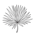 Fan shaped leaf of palmetto tree sketch style vector image