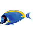 Blue Fish vector image vector image