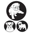pug dog vector image vector image