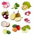 thai fruits vector image vector image