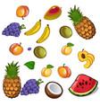 set of appetites tropical fruites vector image