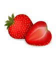 juicy delicious ripe strawberries vector image