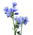 Blue Watercolor Flowers vector image