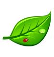 ladybug vector image