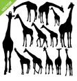 Giraffe silhouettes vector image