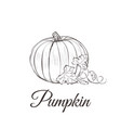 pumpkin sketch drawing with leaves vector image