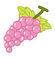 fruit grapes isolated vector image