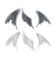 avian wings vector image