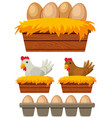 chicken and eggs in the nest vector image