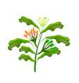 Fresh Clove Plant on A White Background vector image