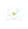 Blue water lily vector image vector image
