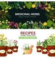 Medicinal Herbs Banners vector image