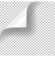 Curly Page Corner vector image