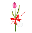 A Fresh Pink Tulip with Red Ribbon vector image