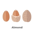 Almond Nuts in Flat Design vector image