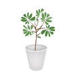 Green Trees and Plants in A Flower Pot vector image