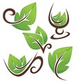 leaves and cups vector image