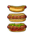 hotdog with tomato mustard leave lettuce vector image