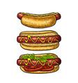 hotdog with tomato mustard leave lettuce vector image