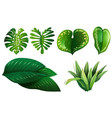 different types of green leaves vector image vector image