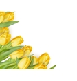 Yellow flowers isolated on white EPS 10 vector image