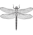 Top view of dragonfly with transparent wings vector image