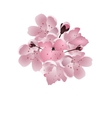 Japanese cherry Bouquet of pink sakura blossom vector image