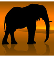 Elephant Sunset vector image vector image