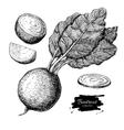 Beetroot hand drawn set Vegetable engraved vector image