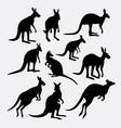 kangaroo wild mammal animal silhouette vector image