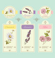 Herbal banner blue vector image