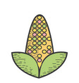 delicious and healthy corn vegan food vector image