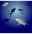 Sharks and scuba divers vector image