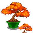 autumn bonsai in a pot tree vector image