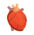 heart medical science flat vector image