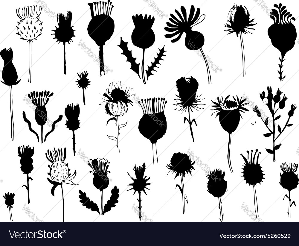 Agrimony plants collection sketch for your design vector