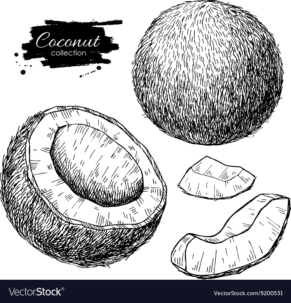 Hand drawn coconut set tropical summer vector