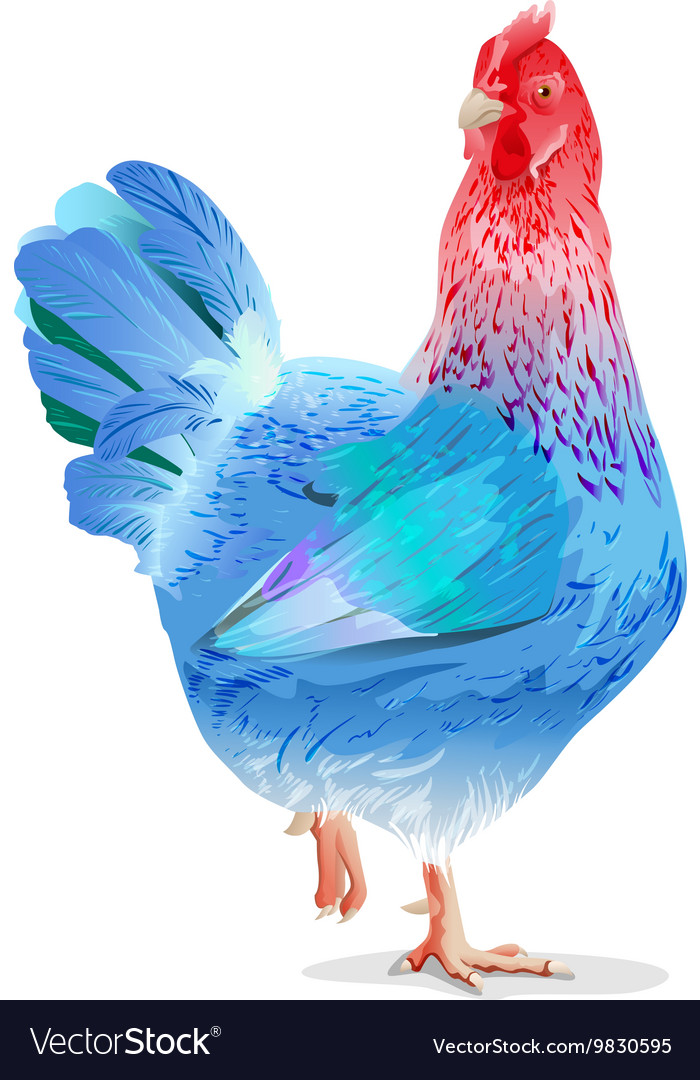 Blue chicken female symbol new year 2017 vector