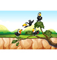 Toucans on the branch vector image