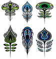 stylized peacock feathers vector image