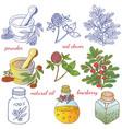 medicinal herbs 2 vector image