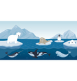 Arctic Animals Character and Background vector image